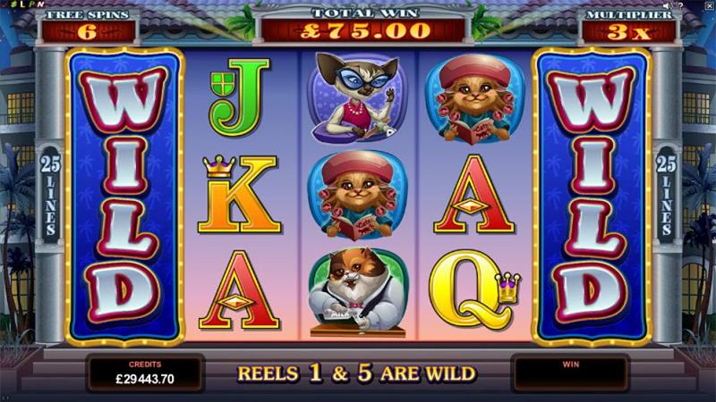 Kitty Cabana Slot Images - CasinoTop