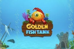 Golden Fish Tank Image