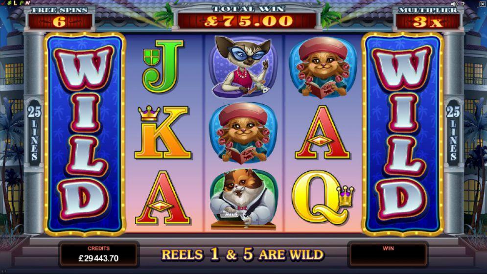 Kitty Cabana Slot Images - CasinoTopp
